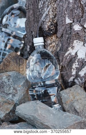 Collect Birch Sap. Juice From A Tree. Season. Birch Sap In A Plastic Bottle