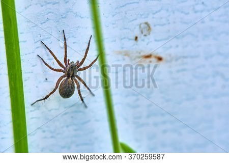 Spider On The Wall Hid In The Grass Color