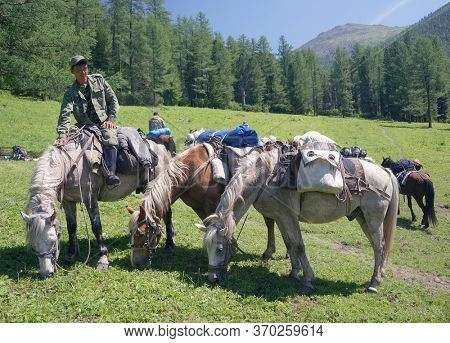 ALTAI MOUNTAINS, RUSSIA - 20 JULY, 2019: Local people using horses for transportation on Belukha Mountain, Altai Republic, Russian Federation