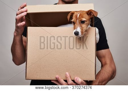 Delivery Man In Black Uniform Hold Cardboard Delivery Box With Jack Russel Dog In It. Cute Pet As A