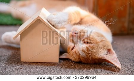 Cat With Wooden House. Self-quarantine And Stay Home During Covid-19. Lovely Pet In The Garden With