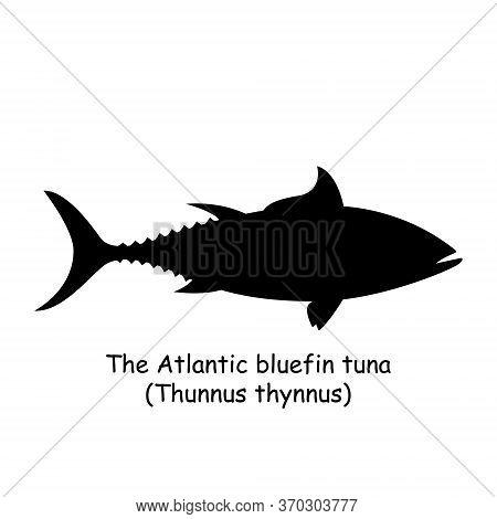 The Black Silhouette Of The Bluefin Tuna (thunnus Thynnus) Is Isolated On White Background.