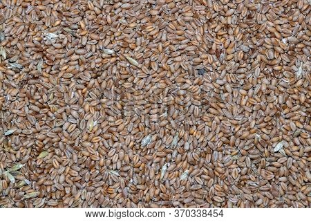 Texture Background Of Oats. Background Of Oats. The View From The Top. Oats Close Up