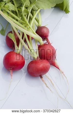 Radish Bunch On White Background. Fresh Radish Root Bundle