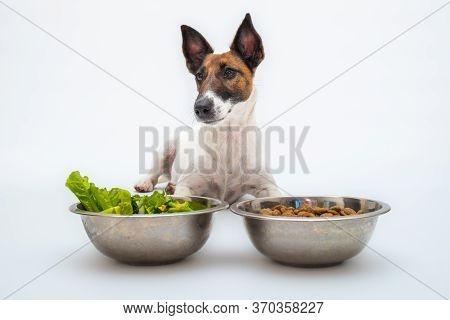 Funny Dog And Two Bowls Of Natural Vegetables And Regular Dog Food, Studio Shot. Dog Nutrition, Pet