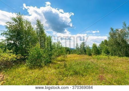 Forest On The Hillside Meadow. Beautiful Countryside Nature Scenery. Range Of Trees Beneath A Blue S