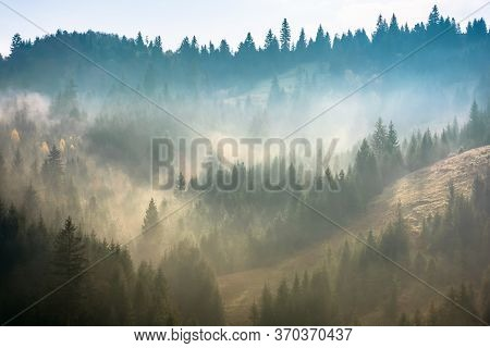 Mist Above The Spruce Forest On The Hill. Mysterious Foggy Weather In The Morning. Fantastic Mountai