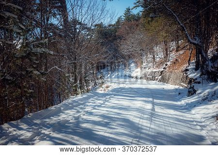 Snowy Road In Winter Forest. Awesome Winter Landscape.
