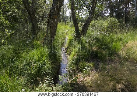 Hoge Kempen National Park In Flanders, Belgium At Summer. Forest Stream Among Green Grasses And Tree