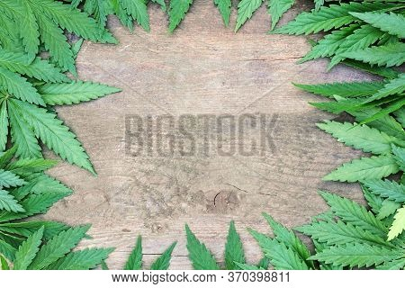 Green Hemp Leaves Around The Perimeter Of A Wooden Background. Photo Frame With Center Free Space
