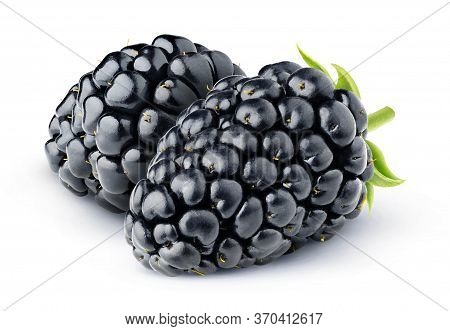 Isolated Berries. Two Blackberries Isolated On White Background
