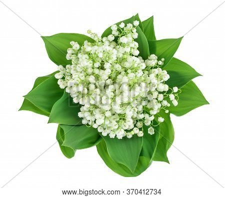 Lilly Of The Valley Flowers Isolated On White Background With Clipping Path And Full Depth Of Field.