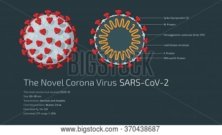 Detailed Flat Vector Illustration Of The Structure Of The Novel Corona Virus Sars-cov-2, The Virus C