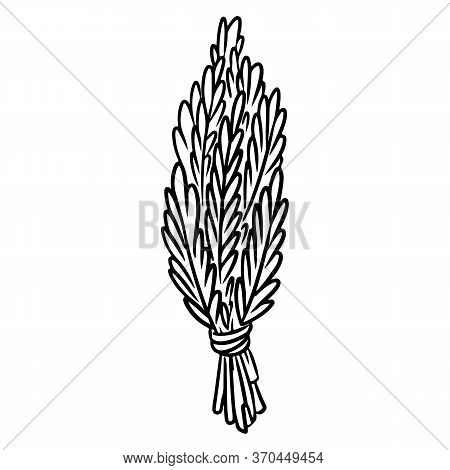 Sage Smudge Stick Hand-drawn Doodle Isolated Icon. Vector Stock Plant Leaves Image. Rosemary Or Sage