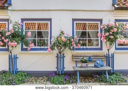 Pink Roses In Front Of A Little House In Holm, Germany