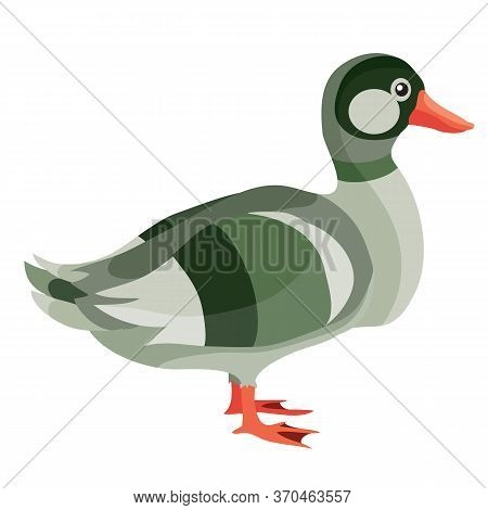Duck Or Drake From The Farm, Flat, Isolated Object On A White Background, Vector Illustration,