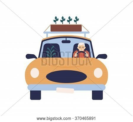 Elderly Man In Glasses Driving Car With Box Of Plant On Roof Vector Flat Illustration. Aged Male Rid