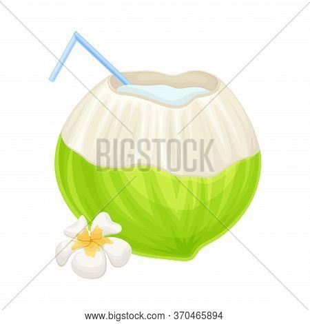 Subtropical Coconut Cocktail In Green Coconut Shell With Straw And Plumeria Flower Vector Illustrati