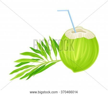 Subtropical Coconut Cocktail In Green Coconut Shell With Straw And Palm Leaf Vector Illustration