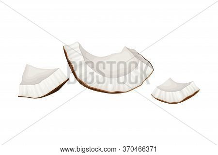 Cracked Coconut With Hard Shell And Fibrous Husk Showing White Inner Flesh Vector Illustration