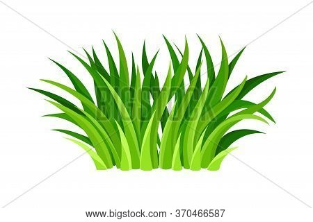 Green Grass Blades Or Herbage As Forest Element Vector Illustration