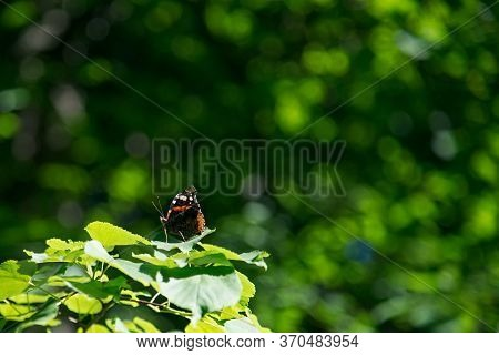 Butterfly Basking In The Sun On A Leaf