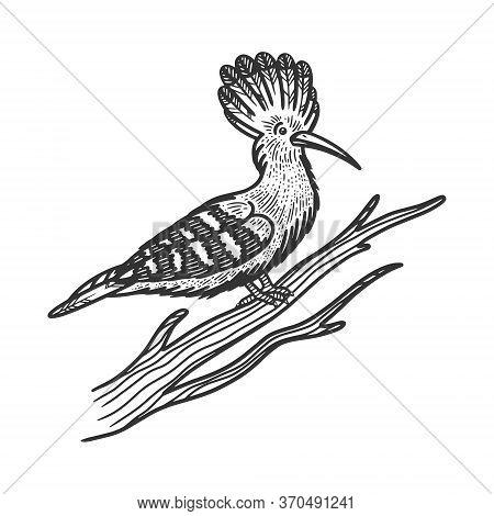 Eurasian Hoopoe Bird Sketch Engraving Vector Illustration. T-shirt Apparel Print Design. Scratch Boa
