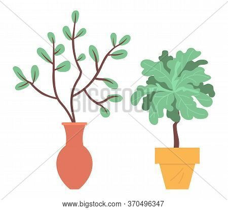 Domestic Plants Vector, Pots And Vases With Foliage, Set Of Blooming Leaves And Flowers. Botanical E
