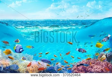 Colorful tropical fish in coastal waters. Animals of the underwater sea world. Life in a coral reef. Ecosystem.