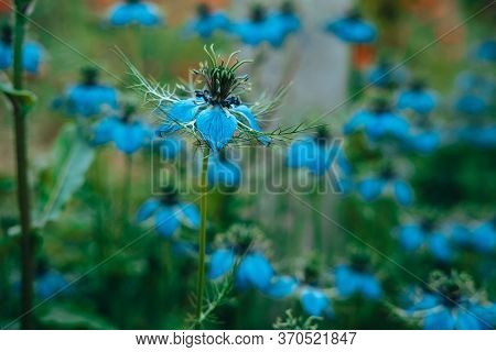 A Young Blue Flower Inside A Larger Bloom And With Light Coming In Between Thee Flowers.