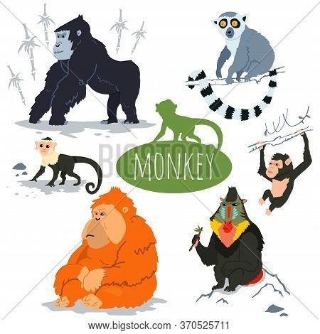 Monkey Character Vector Set. Cartoon Illustration Of A Gorilla, Capuchin, Lemur, Orangutan, Chimpanz