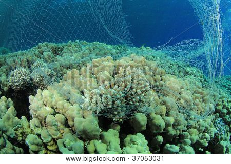 Environmental Destruction - an illegal poacher's fishing net damages coral and kills fish