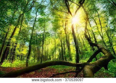 Enchanting Green Landscape Scenery: A Forest Clearing With The Sun Shining Through Green Foliage