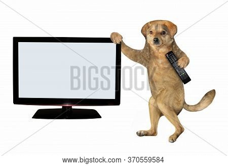 The Beige Dog With A Tv Remote Control In Its Paw Is Standing Near The Television Set With A Blank S