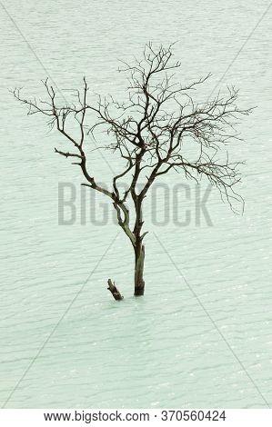 Isolated Tree At Kawah Putih Volcano Lake, Close To Bandung, Indonesia. It Is A Sulfuric Lake Set In