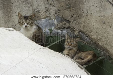 Two Homeless Hungry City Cats Are Hiding, Afraid Of People, They Climbed Into Heat Pipes And Bask Th