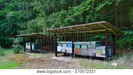 Traditional Rural Beekeeping, South Bohemia, Czech Republic