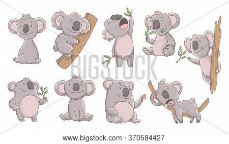 Collection Cute Koala In Different Poses. Hand Drawn Doodle Of Lazy Animals. Cute Cartoon Bear Chara