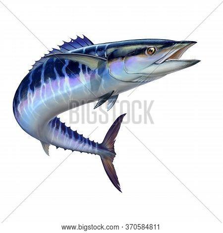 Spanish Mackerel Wahoo Dark Blue Fish Big Fish On White Realistic Illustration Isolate. Oceanic Big