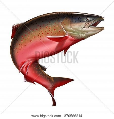 Atlantic Salmon Or Pink Salmon On A White Background. Red Salmon. Fishing On The River Northern Fish