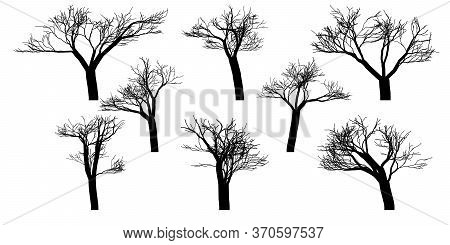 Black Silhouettes Of Naked Vector Trees. Set Isolated On A White Background. Vector Illustration
