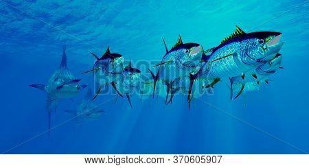 Marlin After Yellowfin Tuna School 3d Illustration - Predatory Blue Marlin Chase After An Undersea S