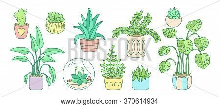 Plant And Succulents, Potted Ceramic Cartoon Doodle Line Set. Color Linear Flat House Indoor Flower.