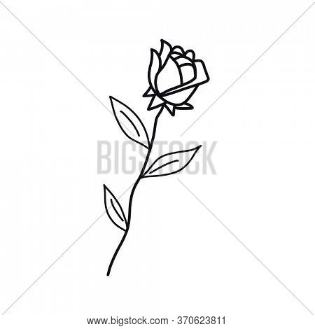 A drawing of a Rose with black ink