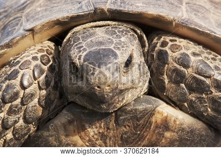 Close-up Portrait Of A Turtle. Wildlife And Wild Animals