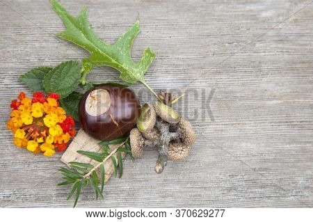 Composition From Nuts, Seeds, Sticks And Flowers Lying On The Wooden Background. (copy Space)