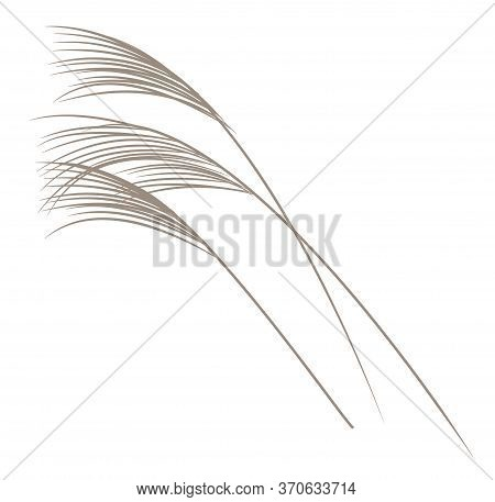 Japanese Style Vector Plant Reed. For Print And Website Design