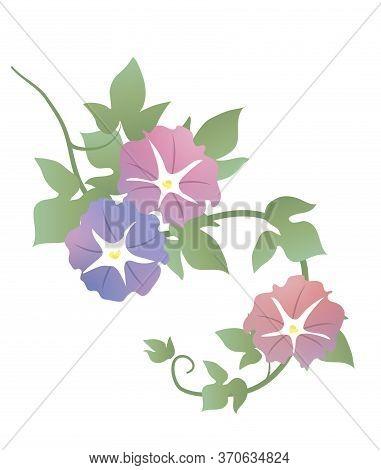 Japanese Style Vector Nature Botanic Garden Morning Glory Flower