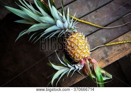 Fresh Pineapple On Wooden Background. Red Pineapple Or Pink Pineapple Is A Species Of The Pineapple.