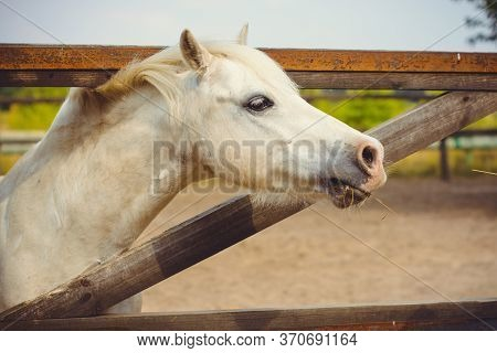 Horses On A Farm, Pets Animals In Village In A Rancho